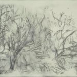 black and white trees, loosely sketched