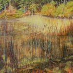 reeds emerging from water by woods