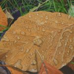 close-up of brown leaf covered with droplets of water