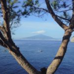 view of volcano between branches of a tree in daytime
