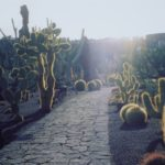 cacti in low bright sunshine