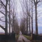 road lined by tall bare trees