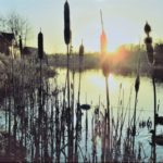 bulrushes by water as sun sets