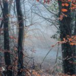 mist through dark trees with a few red leaves left